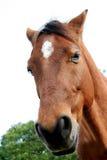 Slaperige poney royalty-vrije stock foto