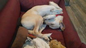 Slaperige van een hond royalty-vrije stock foto's