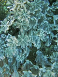 slapp korallblomma royaltyfri fotografi