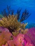 slapp korallrev royaltyfri foto