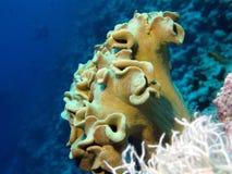 slapp korallrev Arkivbild