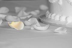 slapp petal Fotografering för Bildbyråer