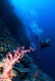 slapp rosa scuba för bakgrundskoralldykare Arkivfoton