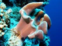 slapp stor rev för korall Fotografering för Bildbyråer