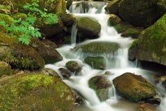 slapp vattenfall för skog Arkivfoto