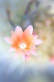 slappa färger Royaltyfria Bilder