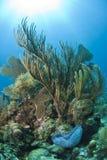slappa koraller Royaltyfri Fotografi