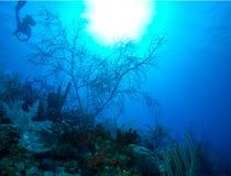 Slappa koraller near Cayo Largo, Kuba Arkivfoton