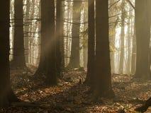 Slappt passerar morgonljus mellan threes Arkivbild
