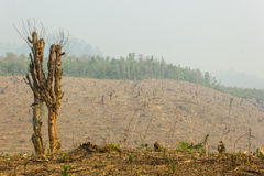 Slash and burn cultivation, rainforest cut and burned to plant c Royalty Free Stock Image