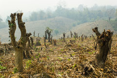 Slash and burn cultivation, rainforest cut and burned to plant Stock Image