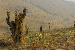 Slash and burn cultivation. Rainforest cut and burned to plant crops, Thailand Stock Photo