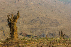 Slash and burn cultivation. Rainforest cut and burned to plant crops, Thailand Stock Photography