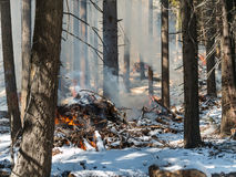 Slash burn fire, Tahoe National Forest Stock Images