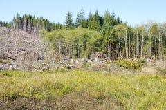 Slash piles and clear cut Douglas fir forest Stock Photography