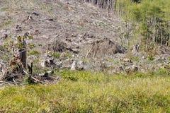 Slash piles and clear cut Douglas fir forest Stock Photos