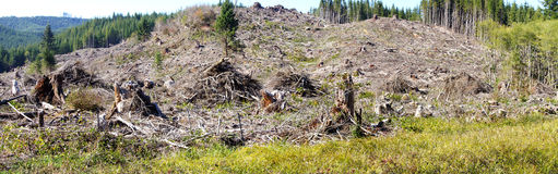 Slash piles and clear cut Douglas fir forest Royalty Free Stock Photos