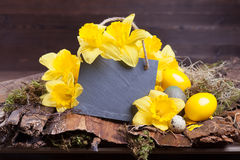 Slat plate with daffodils. Easter daffodil and slate plate decoration with copyspace Stock Photo