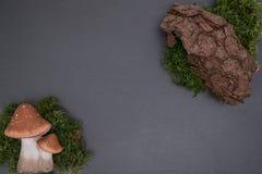 Slate al tablero con el musgo, la corteza y las setas Foto de archivo