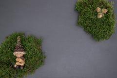 Slate al tablero con el musgo, las bellotas y gnomo Foto de archivo