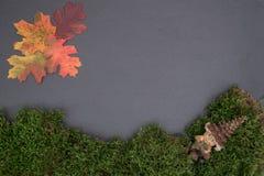 Slate al tablero con el musgo, las hojas y gnomo Foto de archivo