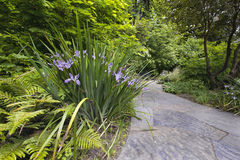 Slate Stone Garden Path with Oregon Irises Stock Photography