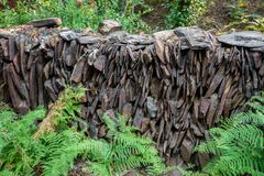 Slate wall with ferns Stock Image