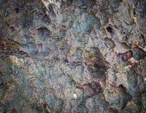 Slater θάλασσας στο βράχο Στοκ φωτογραφίες με δικαίωμα ελεύθερης χρήσης