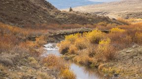 Slater Creek In California Park, Colorado royalty free stock photography