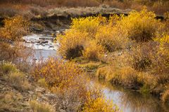 Slater Creek In California Park, Colorado stock image