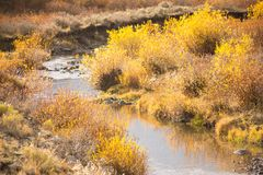 Slater Creek In California Park, Colorado stock photos