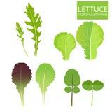 Slatypes Vector Reeks van Saladekom Salade Vectorillustratie Vectordiereeks op witte achtergrond wordt geïsoleerd Royalty-vrije Stock Foto's
