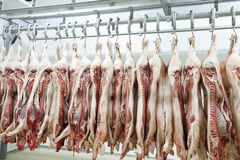 Slaughter house. Butcher products. Processed pigs hanging in a slaughter house