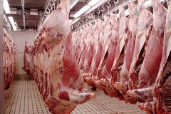 Free Slaughter-house - Macelleria Royalty Free Stock Image - 2250426