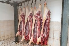 Slaughter of a pig, Carcasses of pigs, Ham pork. Hanged carcasses of pigs royalty free stock images