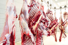 Slaughterhouse. Cows, hanging on hooks in the cold half of cows Royalty Free Stock Images