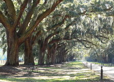 Slavery Plantation with dirt road driveway Stock Images