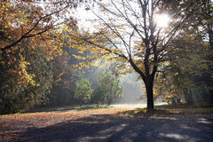 Slavic autumn. In the local park at the morning Stock Image