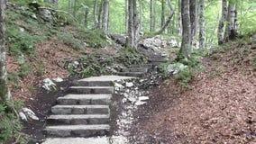 Slavica瀑布,小径, bohinj, slovenie 114046 股票录像
