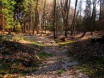 Slavkovsky les forest. Slavkovsky les also called emperor`s forest and kaiserwald in the czech republic Stock Images