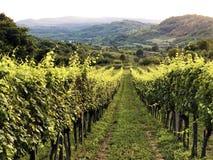 Free Slavonian Vineyards On The Slopes Of The Pozega Basin Royalty Free Stock Photo - 158096725