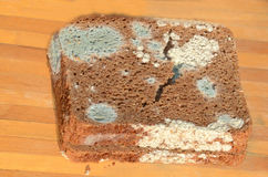 Slecht brood Royalty-vrije Stock Afbeelding