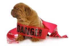 Slecht puppy stock fotografie
