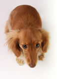 Slecht puppy stock foto's