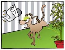 Slechte hond Royalty-vrije Stock Afbeeldingen