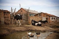 slechte huisvesting in een dorp royalty-vrije stock fotografie