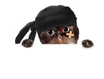 Slechte kat Stock Foto