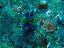Slechte Ridderseilanden Marine Reserve onderwater royalty-vrije stock afbeelding