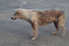 Slechte schurftige hond stock fotografie