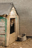 Slechte werfhond op de ketting in de cabine Royalty-vrije Stock Foto's